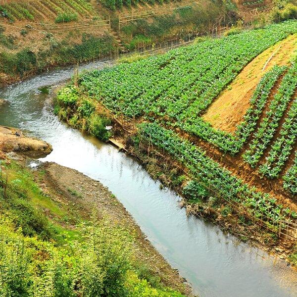 Organic Farm in Laos