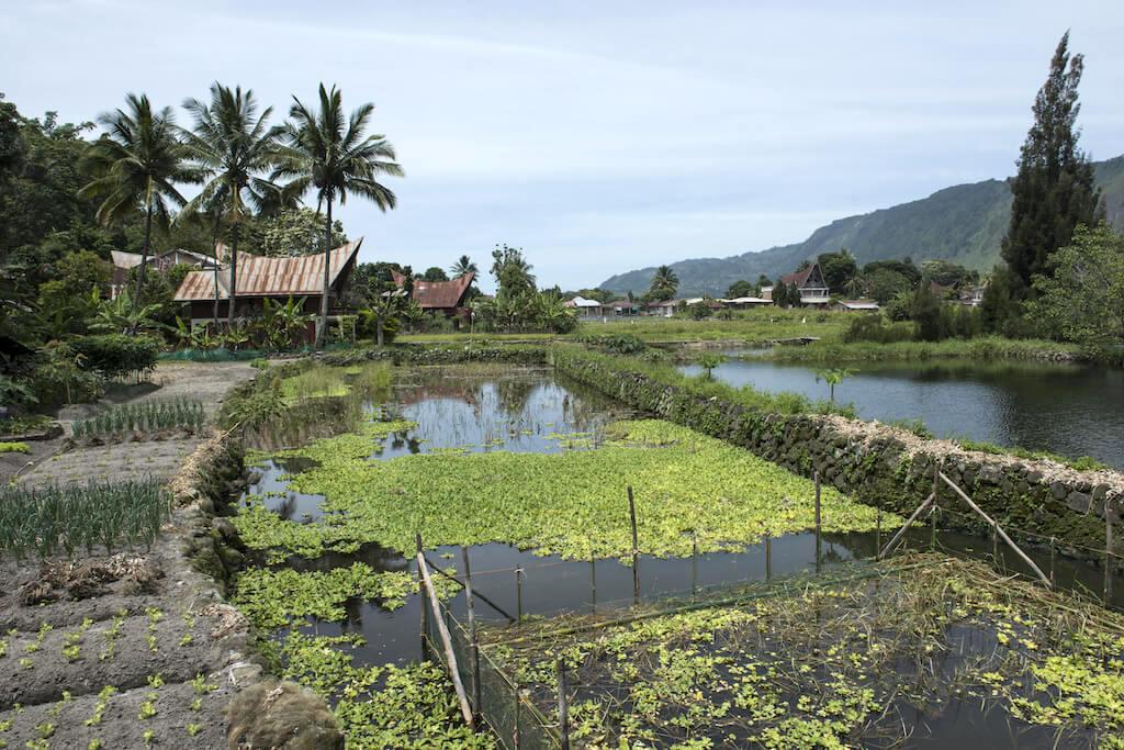 Sumatra Lagoons