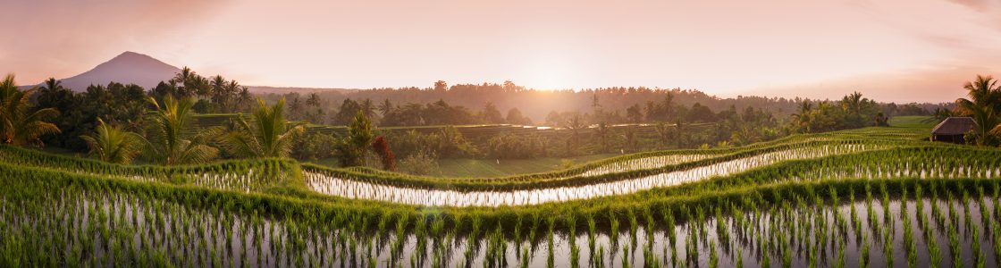 Bali Rice Fields. The village of Belimbing, Bali, boasts some of the most beautiful and dramatic rice terraces in all of Indonesia. Morning light is a wonderful time to photograph the landscape.